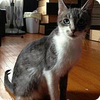 Adopt A Pet :: Hunni - Hamilton, ON