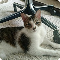 Adopt A Pet :: Rocketman - St. Louis, MO