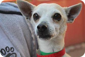 Chihuahua Mix Dog for adoption in Meridian, Idaho - Saxon