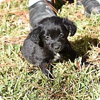Adopt A Pet :: Blake - South Dennis, MA