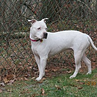 Adopt A Pet :: Jewels - 11 - Wapwallopen, PA