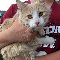 Adopt A Pet :: Talon - Fort Worth, TX