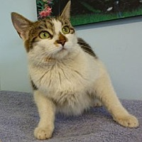 Adopt A Pet :: C - 77 Angeline - Ilderton, ON