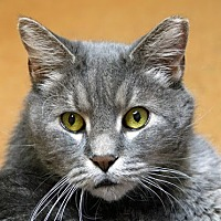 Adopt A Pet :: Chunky - Norwalk, CT