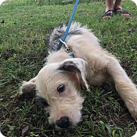 Adopt A Pet :: Ricky - Harrisonburg, VA