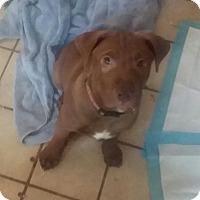 Adopt A Pet :: Joseph - Winchester, VA