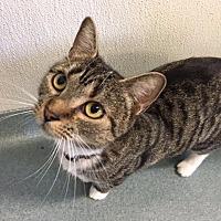 Adopt A Pet :: Luna Tuna - Cumberland, ME
