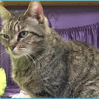 Adopt A Pet :: Hazel - Metairie, LA