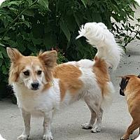 Adopt A Pet :: Corky - Baileyton, AL