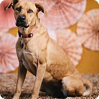 Adopt A Pet :: Georgia Isa Peach - Portland, OR