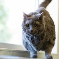 Adopt A Pet :: Jubilee - Davenport, IA