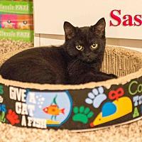Adopt A Pet :: Sassy - Baltimore, MD