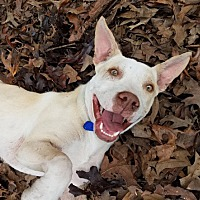 Adopt A Pet :: Able - Holly Springs, MS