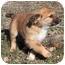 Photo 2 - Terrier (Unknown Type, Medium) Mix Puppy for adoption in Marion, Arkansas - Anna-PENDING