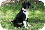 Labrador Retriever Mix Dog for adoption in Summerville, South Carolina - Dock