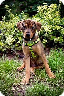 Hound (Unknown Type) Mix Puppy for adoption in Jersey City, New Jersey - Tim Robbins