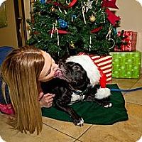 Adopt A Pet :: Summer - Mission Viejo, CA