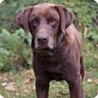 Adopt A Pet :: Hanson - Lewisville, IN