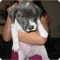 Adopt A Pet :: Mannie - Reisterstown, MD