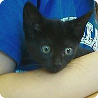 Adopt A Pet :: Alpha - Riverhead, NY
