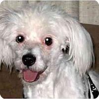 Adopt A Pet :: Cole - Mays Landing, NJ