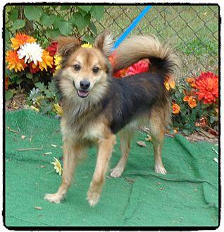 Spaniel (Unknown Type) Mix Dog for adoption in Marietta, Georgia - OSCAR (R)