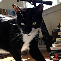 Adopt A Pet :: Radar - Brooklyn, NY