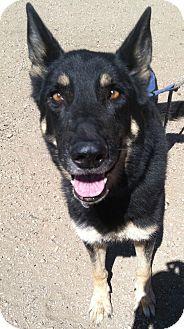 German Shepherd Dog Dog for adoption in Sylacauga, Alabama - Max