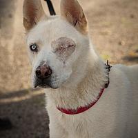 Adopt A Pet :: Titan - Cedar Crest, NM