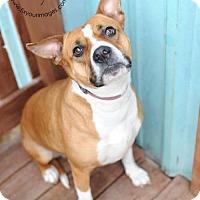 Adopt A Pet :: Rumor - Kansas City, MO
