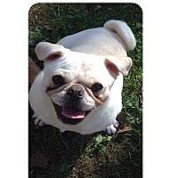 Adopt A Pet :: Bella - Bellbrook, OH