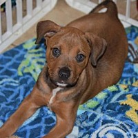 Adopt A Pet :: Zeus - Fairmont, WV