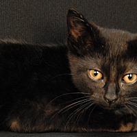 Adopt A Pet :: Roxie - Newland, NC