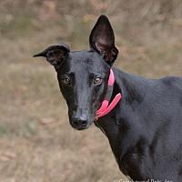 Adopt A Pet :: Elsa - Woodinville, WA