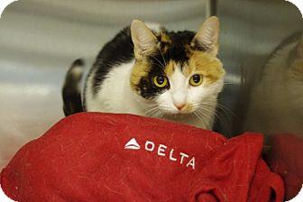 Calico Cat for adoption in Elyria, Ohio - Becca