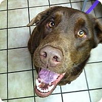 Adopt A Pet :: Nook - Brattleboro, VT
