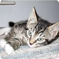 Adopt A Pet :: Denny - Shelton, WA
