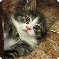 Adopt A Pet :: Squirt - Acme, PA