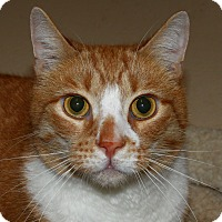 Adopt A Pet :: Gus - North Branford, CT