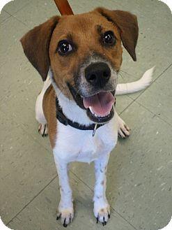 Beagle Mix Dog for adoption in Cleveland, Mississippi - RED