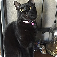 Adopt A Pet :: Twilight KS - Schertz, TX