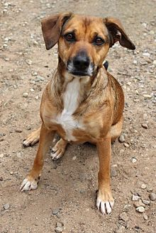 Shepherd (Unknown Type) Mix Dog for adoption in Keyport, New Jersey - Bleu