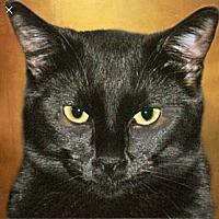 Adopt A Pet :: Applejack - Glendale, AZ