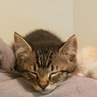 Adopt A Pet :: Basil - Waggaman, LA