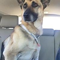 Adopt A Pet :: Baby Bruin - Fresno, CA