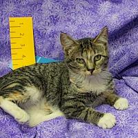 Adopt A Pet :: Karubi - Addison, IL