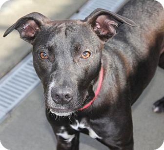 Labrador Retriever Mix Dog for adoption in Grants Pass, Oregon - Tabytha