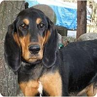 Adopt A Pet :: Ranger - Dallas, TX