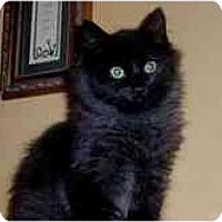 Adopt A Pet :: Atlas - Arlington, VA