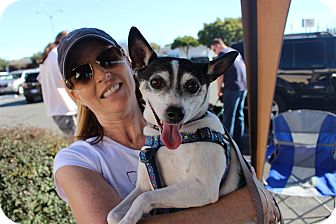 Rat Terrier Mix Dog for adoption in Yuba City, California - Billy